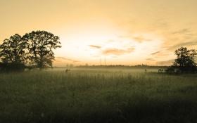 Обои трава, деревья, провода, вечер, ЛЭП
