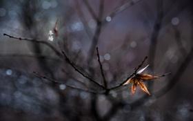 Обои лист, дерево, один, фокус, ветка, иероглифы