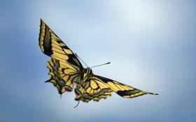 Обои макро, полет, бабочка