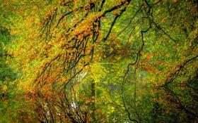 Картинка осень, лес, листья, вода, деревья, природа, отражение