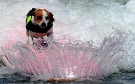 Обои вода, брызги, собака, доска