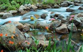 Обои трава, цветы, река, ручей, камни, поток