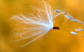 Картинка природа, растение, былинка