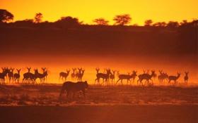 Картинка закат, саванна, африка