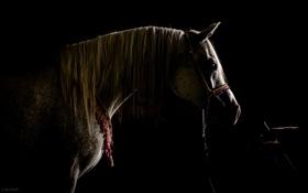 Картинка фон, стойло, конь