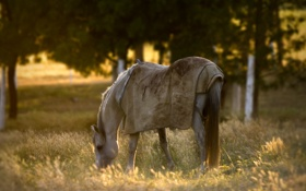 Обои поле, природа, конь