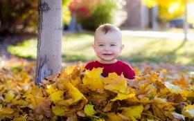Картинка осень, листья, настроение, малчик