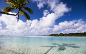 Картинка palm, aitutaki, beach, ocean, summer, island