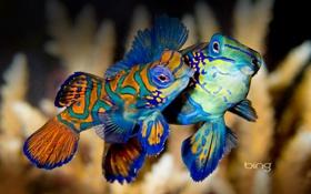 Обои море, вода, краски, цвет, рыба, экзотика, Indonesia