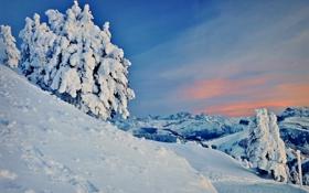Картинка зима, снег, деревья, горы, склон, заснеженные