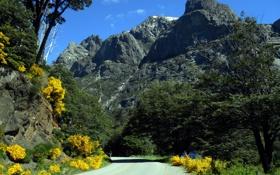 Обои дорога, деревья, пейзаж, цветы, горы, природа, кусты