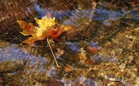 Картинка вода, прозрачность, река, поток, macro, осенний листок, Nikon D60
