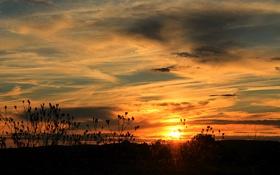 Картинка солнце, облака, закат, растения, силуэты