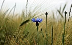 Обои природа, поле, трава, макро, цветы