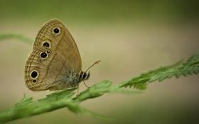 Обои бабочка, трава, ветка, макро