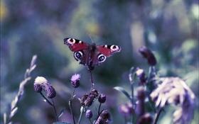 Обои растения, бабочка, цветы, природа, цветения