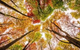 Обои осень, небо, листья, деревья, краски