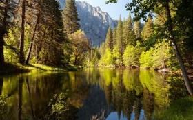Обои лес, природа, озеро, парк, фото, Калифорния, США