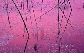 Обои листья, вода, отражение, краски, растение, США, Миннесота