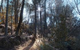 Картинка лес, лучи, тропинка, солнце