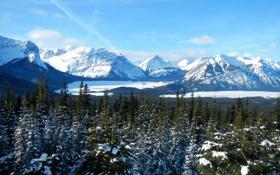 Обои ледник, долина, Канада, Alberta, деревья, зима, горы