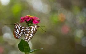 Картинка стебель, цветок, бабочки, лепестки, природа