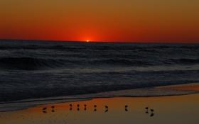 Обои закат, берег, солнце, горизонт, волны, птицы, море