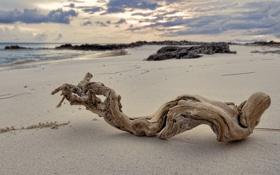 Обои песок, море, облака, камни, дерево, сухое, коряка