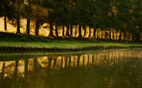 Обои трава, вода, лучи, свет, деревья, природа, парк