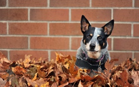Обои листья, стена, собака