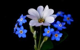 Обои природа, фон, растение, лепестки, цветы