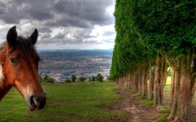 Обои небо, облака, город, деревья, лошадь