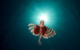 Картинка под водой, рыба, underwater, солнце