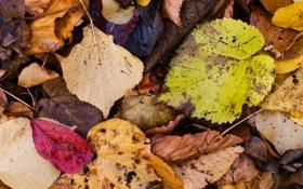 Обои макро, листва, микс, осенний