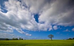 Картинка поле, лето, небо, пейзаж, дерево