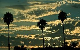 Картинка облака, пальмы, Небо