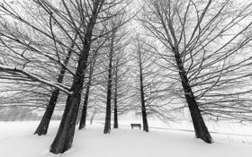 Обои зима, город, парк, скамья