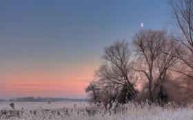 Обои иней, поле, деревья, закат, Луна