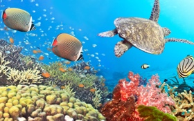 Картинка turtle, Подводная съемка, морских, panorama, fishes, Underwater, sea