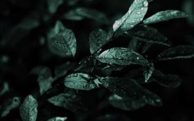 Обои листья, дождь, растение, капли, зелень, ветка, макро