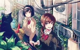 Картинка кот, девушки, растения, аниме, арт, форма, школьницы