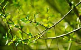 Обои листья, весна, солнце, ветви
