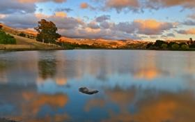 Обои деревья, озеро, облака, отражение