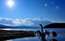 Картинка небо, вода, солнце, пейзаж, природа, красота, лебеди