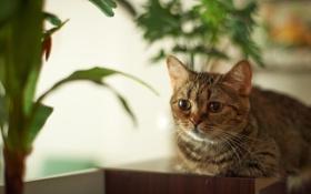 Обои кошка, комната, растение, лежа