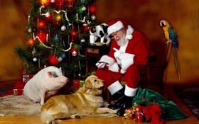 Обои кот, шары, животные, кошка, кресло, стакан, Санта