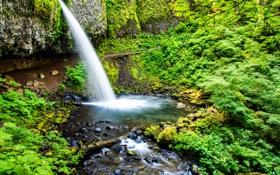 Картинка зелень, камни, водопад, мох, США, Oregon, Ponytail Falls
