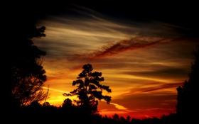 Картинка деревья, закат, вечер, тёмные, силуеты