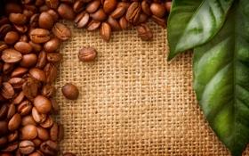 Обои листья, кофе, зёрна