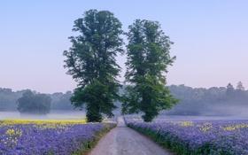 Картинка дорога, поле, небо, цветы, туман